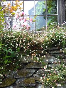 Kuvassa kukkiva puutarha, polku ja ikkuna