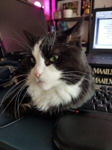 Mustavalkoinen ja vihreäsilmäinen kissa katsoo kameraan, taustalla tietokoneen näyttö.